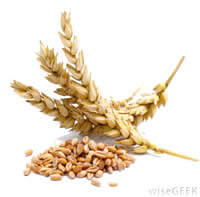 wheat seed treatment inoculant